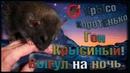 (О) Крысиный гон, или выгул на ночь. Играем, или что? (Wild Rats | Дикие крысы)