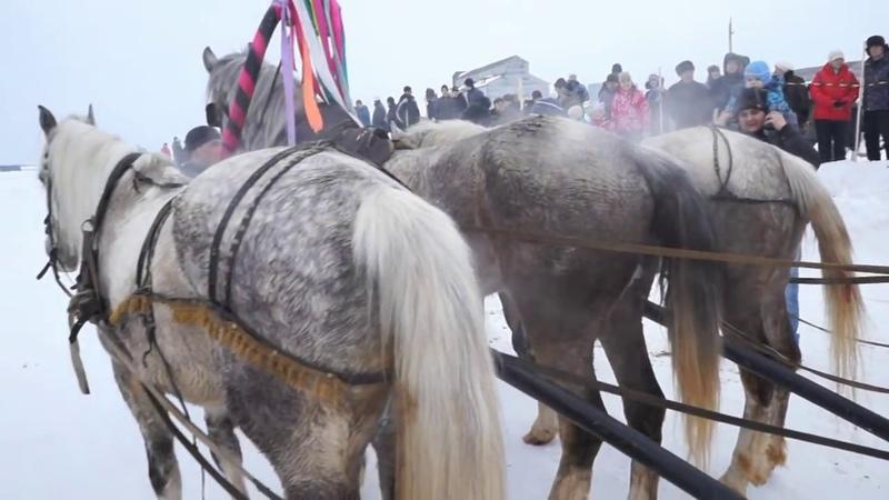 Конные соревнования с Богородск 2016