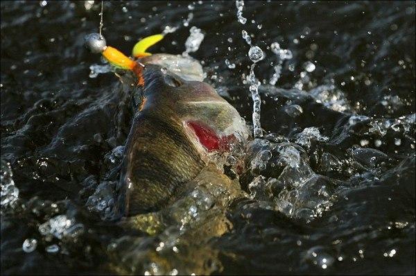 Настоящий рыбак - это не тот, кто много рыбы поймал, а тот, кто аргументировано доказал - в этот раз рыбу поймать не было никакой возможности.