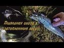 Подводная охота в затопленном лесу / Underwater hunting in the flooded forest