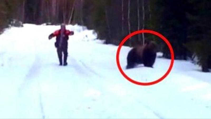 Медведь бросился на человека, но пожалел об этом. Такого хищник точно не ожидал!
