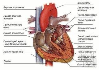 Гипертония и заболевания сердечно сосудистой системы.  Если появились первые признаки появления гипертонической...