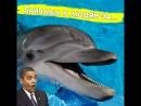 Этот дельфин приплыл за помощью к людям!