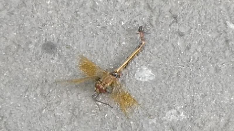 Стрекоза и муравей эпилог