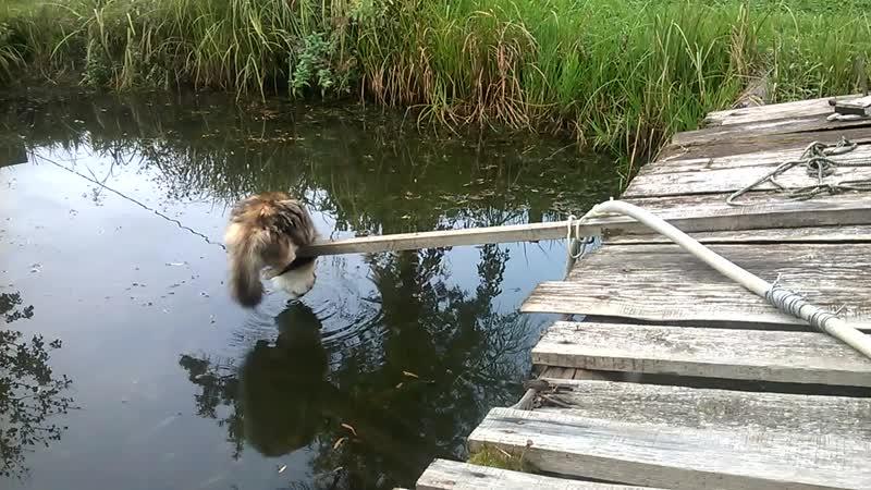 Кошечка пьет воду из пруда