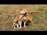 История Мари и трех щенков (2007) - ТРЕЙЛЕР