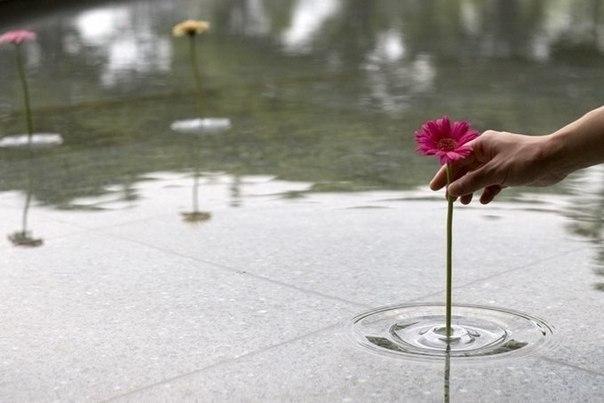 Плавающая ваза, которая держится на поверхности воды словно поплавок. Ваза создана из прозрачного пластика, и поэтому внешне сливается с водой.