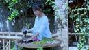 How to make a Chinese herbal tea? 逍遥草本茶,泡一杯自在逍遥!