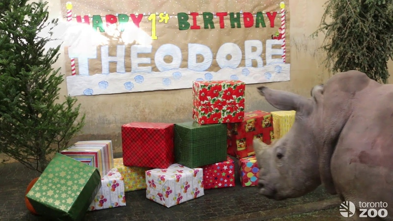 Theo's First Birthday
