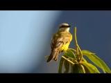 PAISAJES HERMOSOS DEL PERU HD EL MEJOR VIDEO (1).mp4