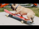 Eroc Dog x SkatePal - Featuring Nick Jensen