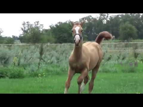 Свобода для лошади Жеребята на прогулке