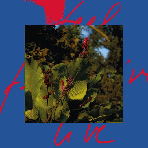 Massimiliano Pagliara альбом Feel Live