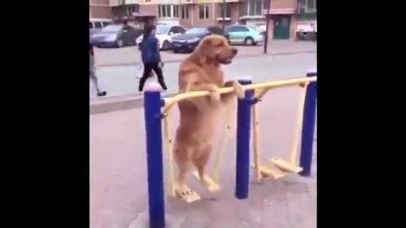 Даже собака готовится к лету