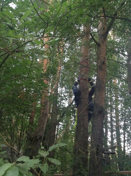 Кот на дереве, Токсово (вызов 634) VVOQ7sgiTfQ