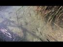 Плитвицкие озера рыбки