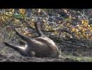 Охота на кабана в Венгрии