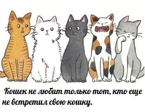 Всё о кошках и собаках - Страница 3 LKMH1XOib7o