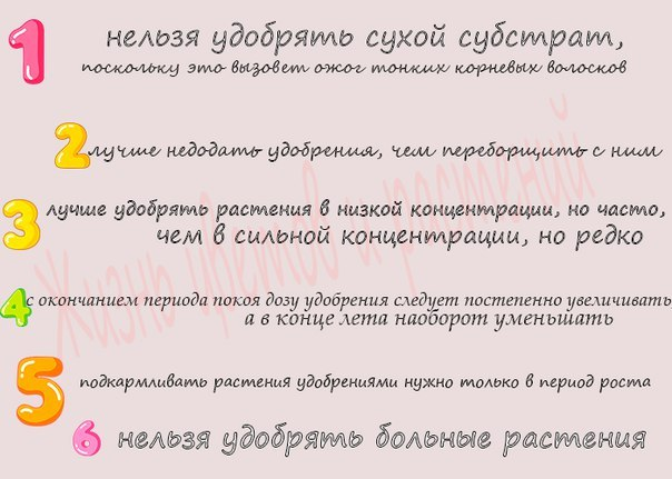 статьи о растениях из  газет и журналов - Страница 8 KHgkLdWYPto