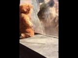 Ребенок одет как лев, лицом к лицу с настоящим большим котом... и он обожает его!