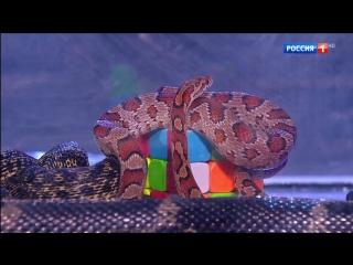 Как собрать кубик Рубика в аквариумах с мышами, змеями и тараканами - #УдивительныеЛюди