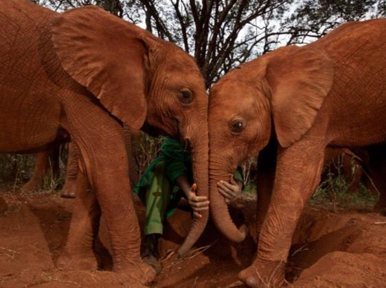 Детский дом для слонят в Найроби Кения восточноафриканская страна, на территории которой находится несколько десятков национальных заповедников и парков. Национальный парк Найроби первый,