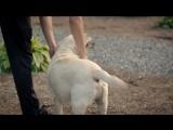 Зак Лавин называл своих собак Коби и Леброном