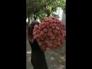 🕐Года идут 👥сменяются поколения 🌹но розы всегда были и будут самыми нежными и красивыми послами любви ♥