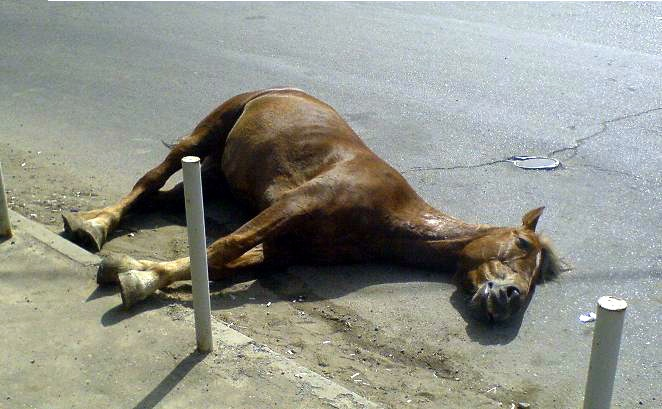 Под Карачаевском иномарка сбила лошадь