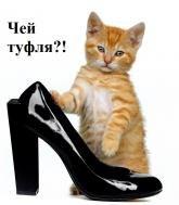 Кот,котенок,настроение,туфли,туфельки,юмор,улыбнись,настроение,смешно,животные,другу,подруге