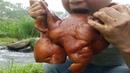 豬頭肉最好吃的做法,好吃不膩,一人吃了大半只