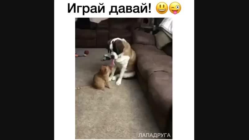 Это надо же... 😳 Знает же, что коты так играют, просёк фишку)