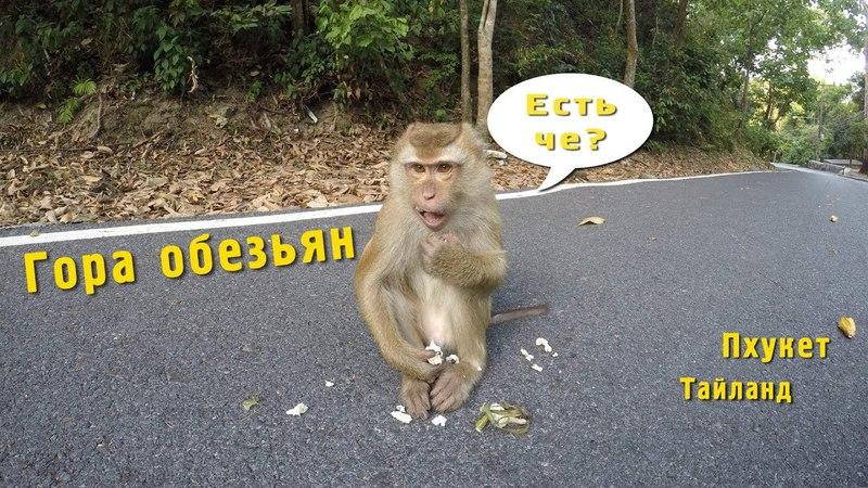 Гора обезьян 🐵 Пхукет Тайланд Monkey hill Phuket Thailand