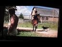 Лошадь и собака. Тверская область. 1996 год.