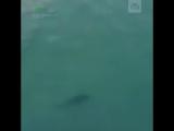 Пляж на тайском курорте закрыли после нападения акулы