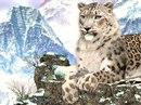 """Скачать картинку 1024x768  """"Снежный барс """" - Животные для мобильного телефона Siemens, Nokia, Motorola, Samsung..."""