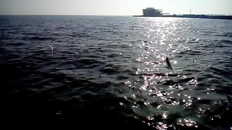 Xezer deniz