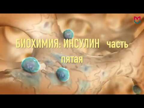 Биохимия Инсулин 5 часть bj bvbz bycekby 5 xfcnm