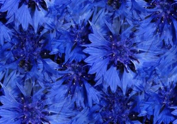 Цветочные и растительные фоны - Страница 2 B2b_w_2BDpk