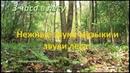 3 часа Нежная музыка, пение птиц и звуки леса