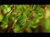 Жизнь леса от зимы до осени за 1,5 минуты
