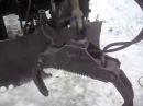 Обзор трелёвочный захват и  лебёдка на тракторе Т-40АМ