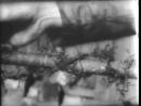 Нацистские концлагеря Кинохроника 1945 года