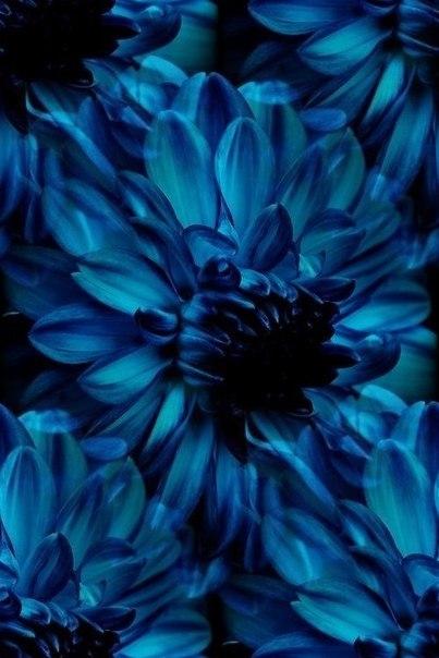Цветочные и растительные фоны - Страница 2 CXqDgz3YddU