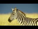 Африканская дикая природа!! Захватующий фильм дикого мира животных
