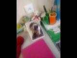 video_29_03_2018_21_46_18.mp4