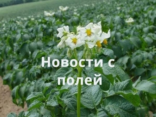 Видео привет от канала Андрей Николаевич