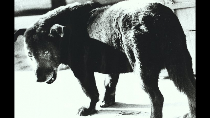 Memories of a dog: Daido Moriyama´s Journey to Photography (2010).
