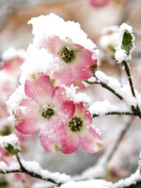 Зима... Морозная и снежная, для кого-то долгожданная, а кем-то не очень любимая, но бесспорно – прекрасная.  DbQthP0w2BQ