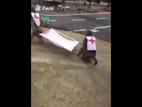 Monkey ambulance